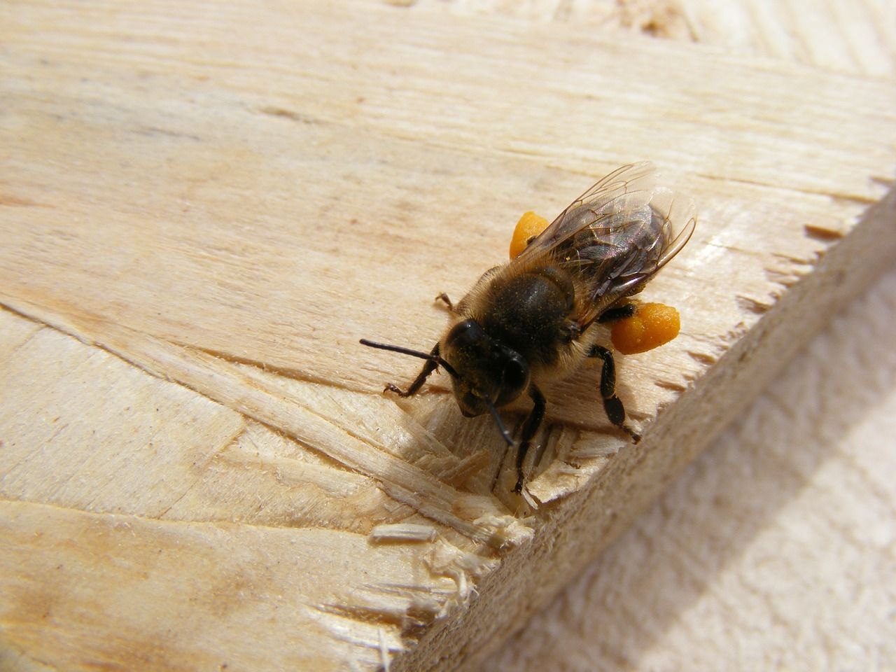 fliegengitter plisseet r perfekter schutz vor insekten f r alle fenster und t ren. Black Bedroom Furniture Sets. Home Design Ideas