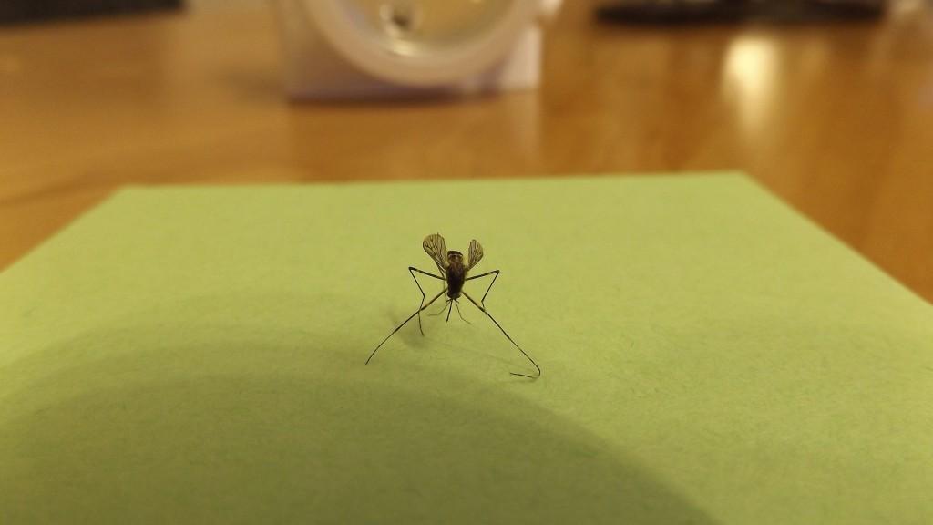 mosquito-606930_1920