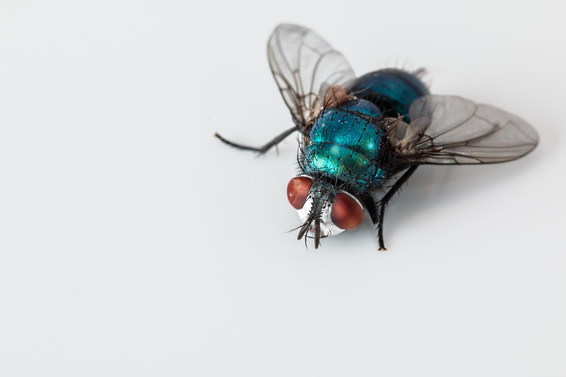 Fliegendreck